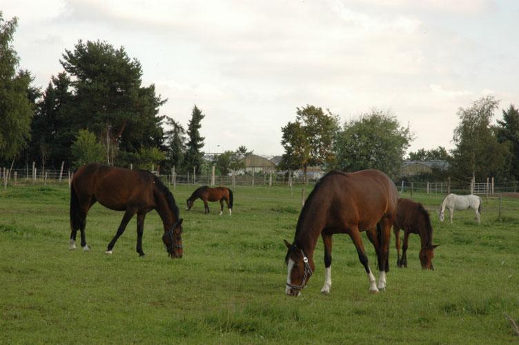 Pferdeweide